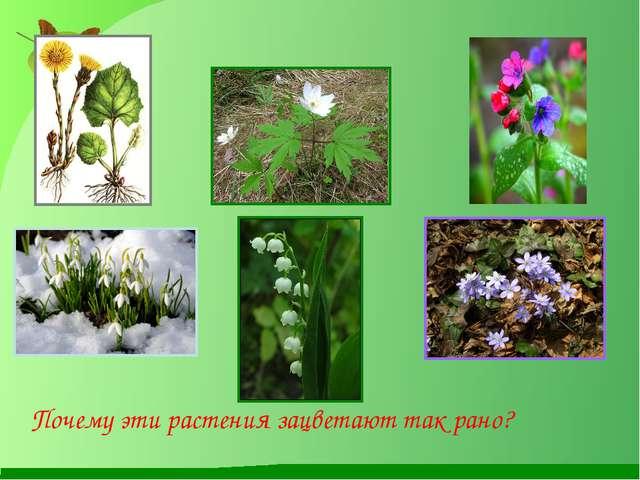 Почему эти растения зацветают так рано?