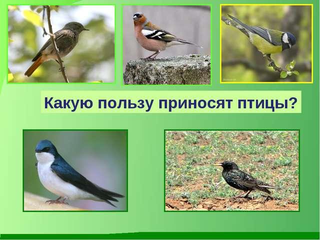Какую пользу приносят птицы?