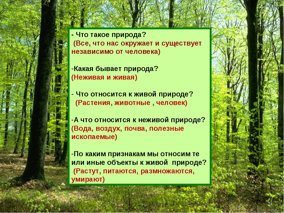 - Что такое природа? (Все, что нас окружает и существует независимо от челове...