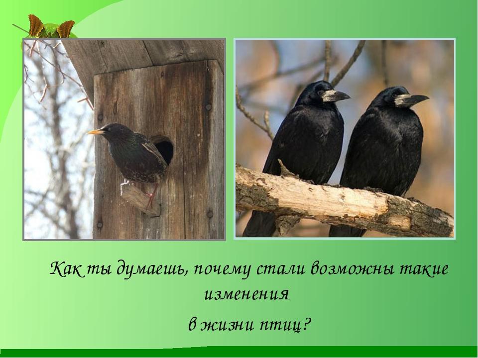 Как ты думаешь, почему стали возможны такие изменения в жизни птиц?