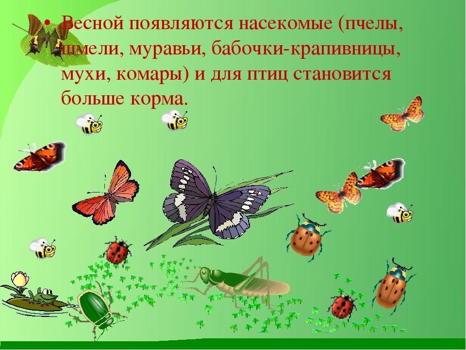 Весной появляются насекомые (пчелы, шмели, муравьи, бабочки-крапивницы, мухи,...