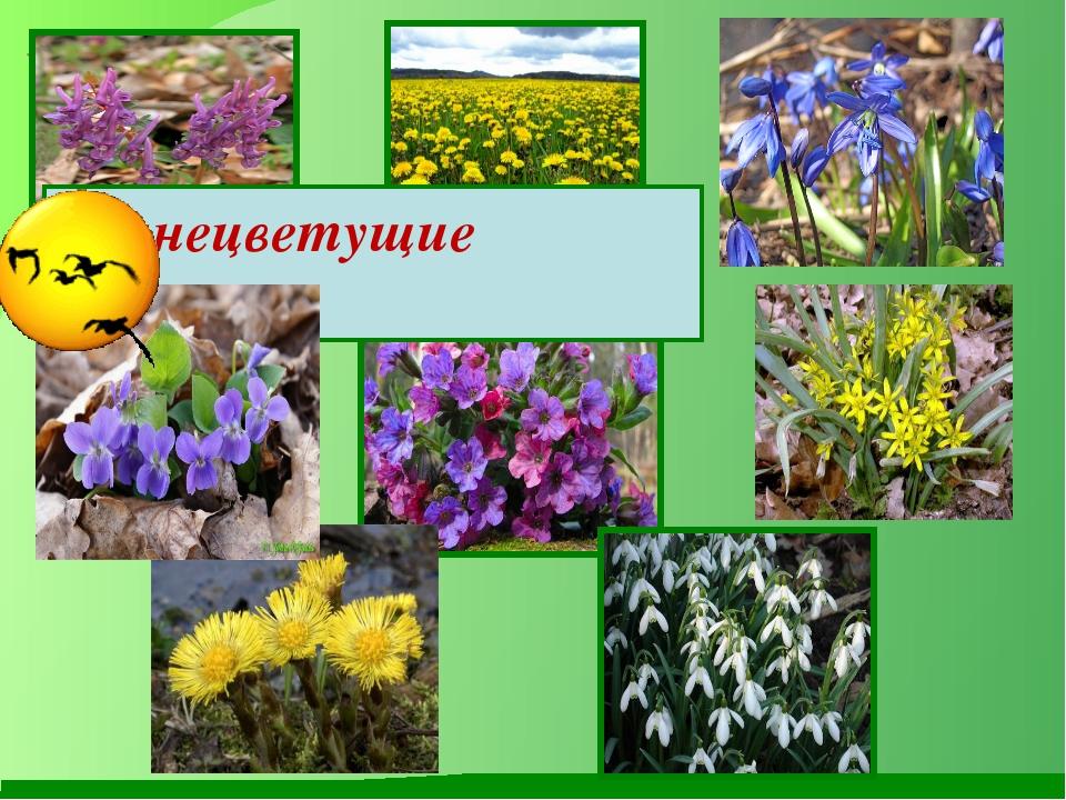Раннецветущие растения
