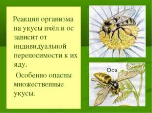 Реакция организма на укусы пчёл и ос зависит от индивидуальной переносимости