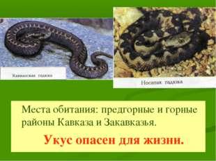 Места обитания: предгорные и горные районы Кавказа и Закавказья. Укус опасен