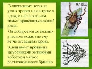 В лиственных лесах на узких тропах или в траве к одежде или к волосам может