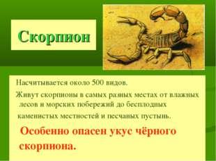 Скорпион Насчитывается около 500 видов. Живут скорпионы в самых разных местах