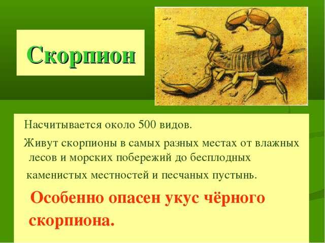 Скорпион Насчитывается около 500 видов. Живут скорпионы в самых разных местах...