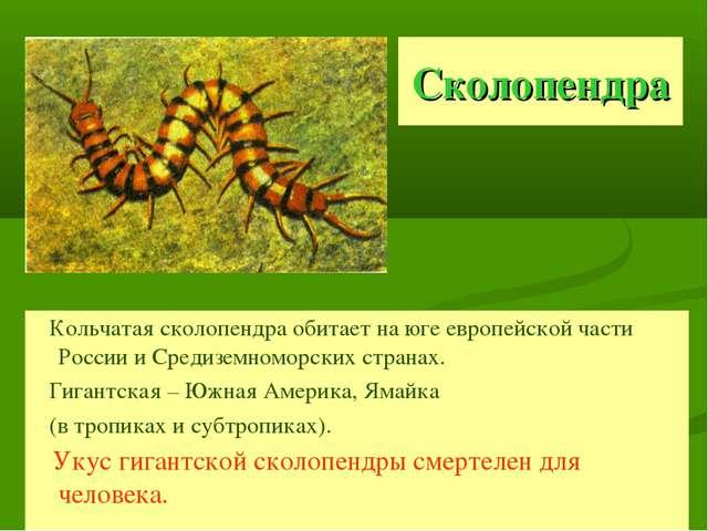 Сколопендра Кольчатая сколопендра обитает на юге европейской части России и С...