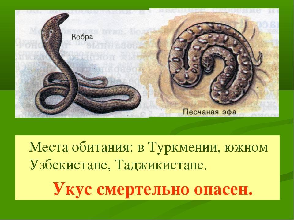 Места обитания: в Туркмении, южном Узбекистане, Таджикистане. Укус смертельн...