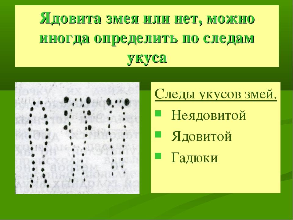 Ядовита змея или нет, можно иногда определить по следам укуса Следы укусов зм...