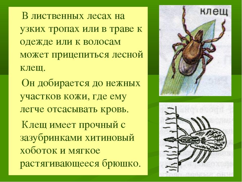 В лиственных лесах на узких тропах или в траве к одежде или к волосам может...