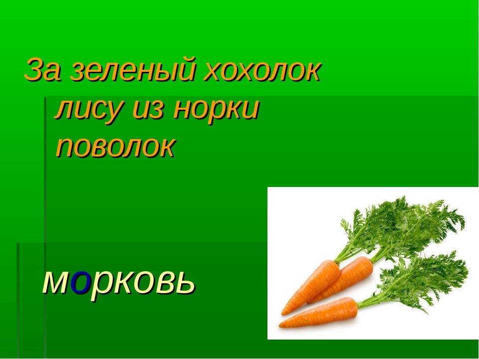 За зеленый хохолок лису из норки поволок морковь