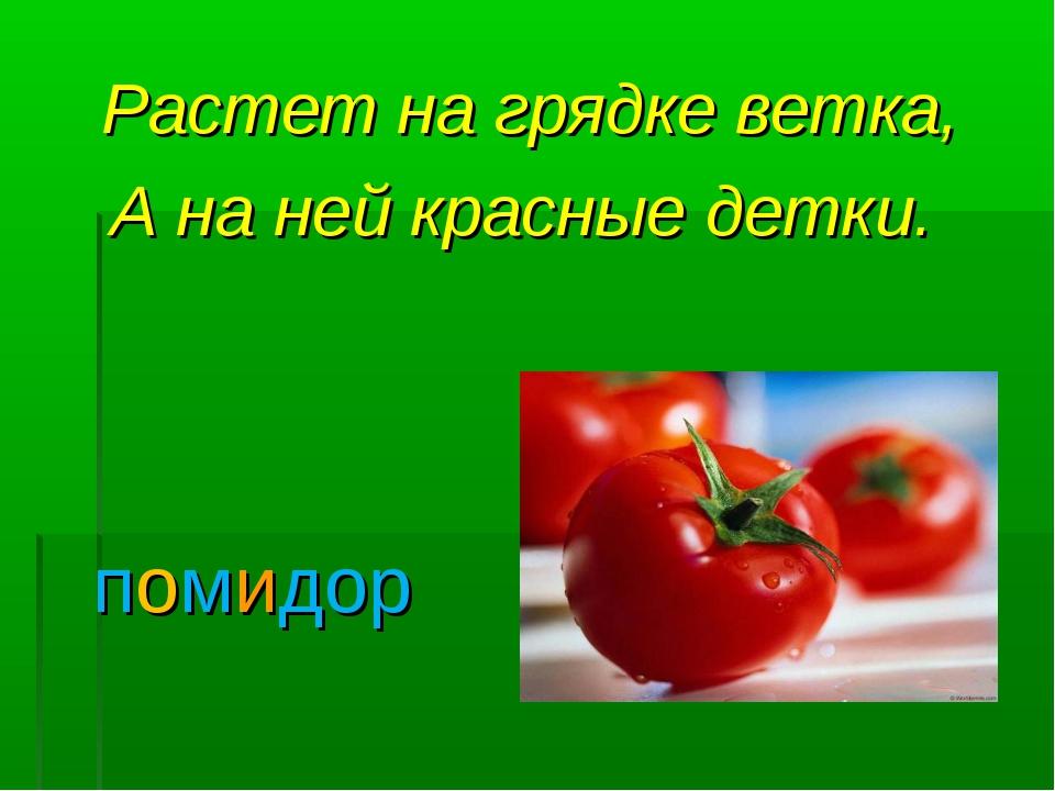 Растет на грядке ветка, А на ней красные детки. помидор