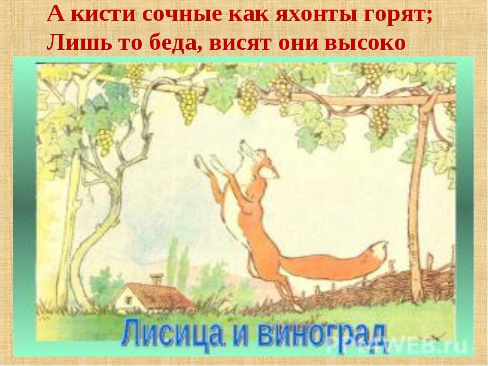А кисти сочные как яхонты горят; Лишь то беда, висят они высоко