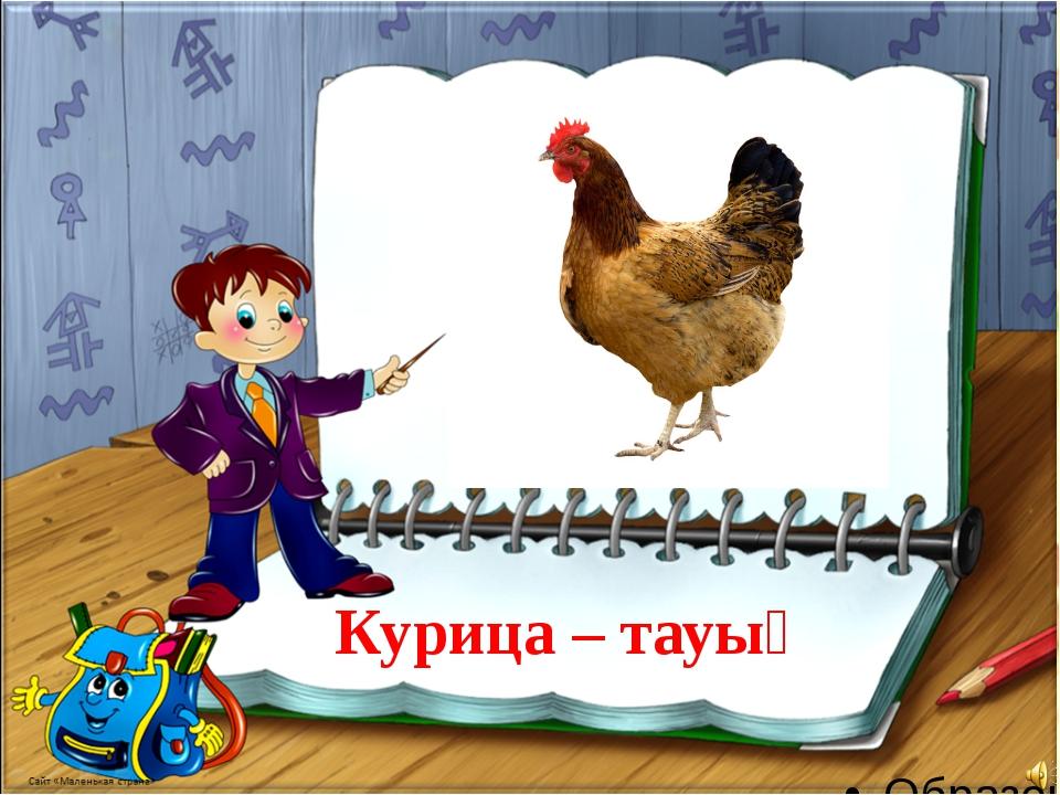Курица – тауық
