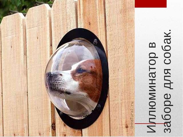 Иллюминатор в заборе для собак.