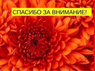 Работу выполняли: Преподаватель Беляева О.А СПАСИБО ЗА ВНИМАНИЕ!