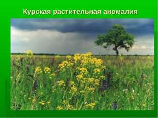 Курская растительная аномалия
