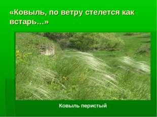 «Ковыль, по ветру стелется как встарь…» Ковыль перистый