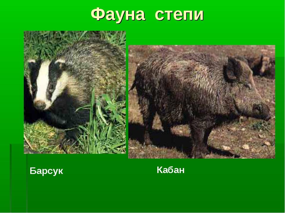Фауна степи Барсук Кабан