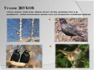 Уголок ЗВУКОВ учатся слушать пение птиц, тишину, шелест листвы, жужжание пчел