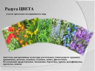 Радуга ЦВЕТА учатся зрительно воспринимать мир цветочно-декоративные культуры