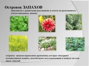 Островок ЗАПАХОВ знакомятся с душистыми растениями и учатся их распознавать;