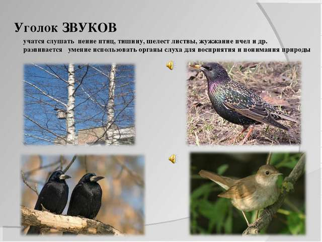 Уголок ЗВУКОВ учатся слушать пение птиц, тишину, шелест листвы, жужжание пчел...