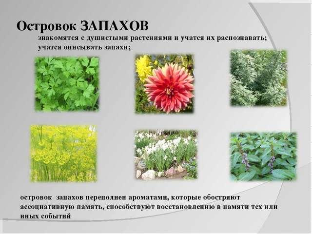 Островок ЗАПАХОВ знакомятся с душистыми растениями и учатся их распознавать;...
