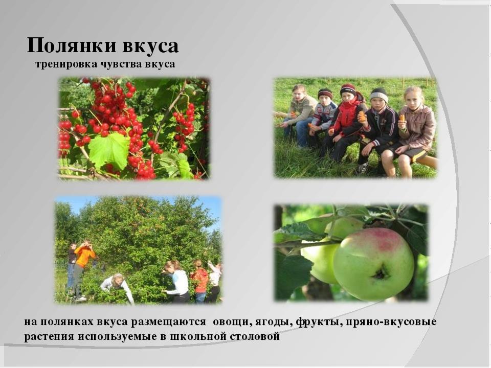 Полянки вкуса тренировка чувства вкуса на полянках вкуса размещаются овощи,...
