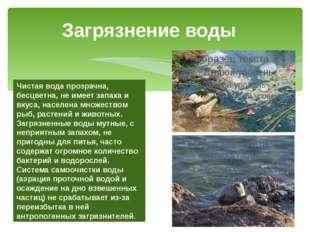 Загрязнение воды Чистая вода прозрачна, бесцветна, не имеет запаха и вкуса, н