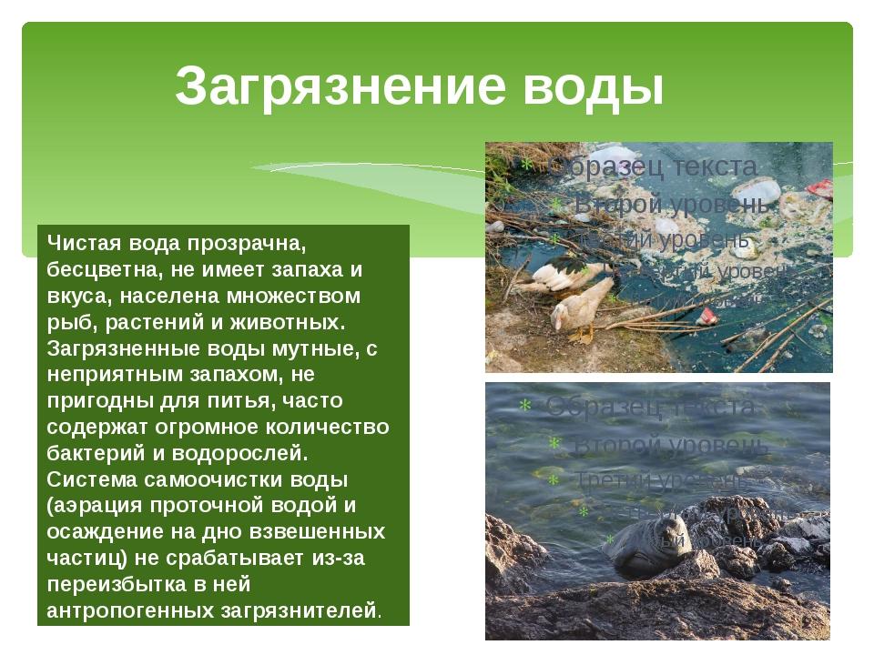 Загрязнение вод россии презентация