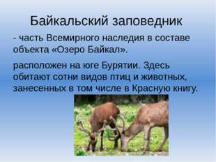 Байкальский заповедник - часть Всемирного наследия в составе объекта «Озеро Б