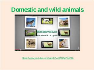 domestic and wild animals Domestic and wild animals https://www.youtube.com/w
