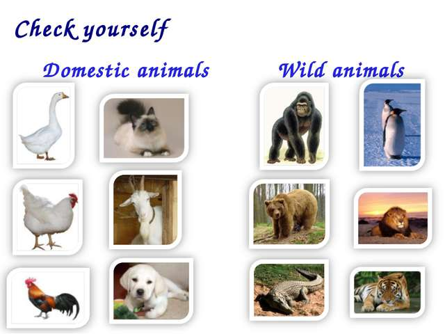 Domestic animals Wild animals Check yourself
