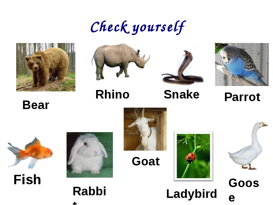 Check yourself Goat Bear Fish Goose Rabbit Rhino Parrot Snake Ladybird