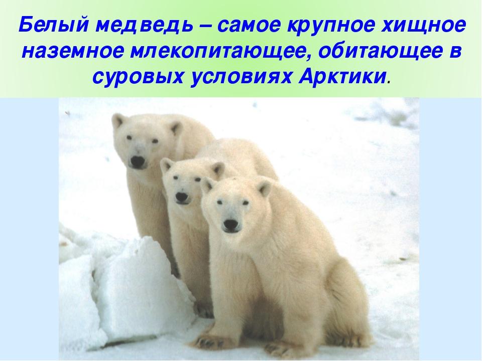 новости для белого медведя сегодняшний день  видео