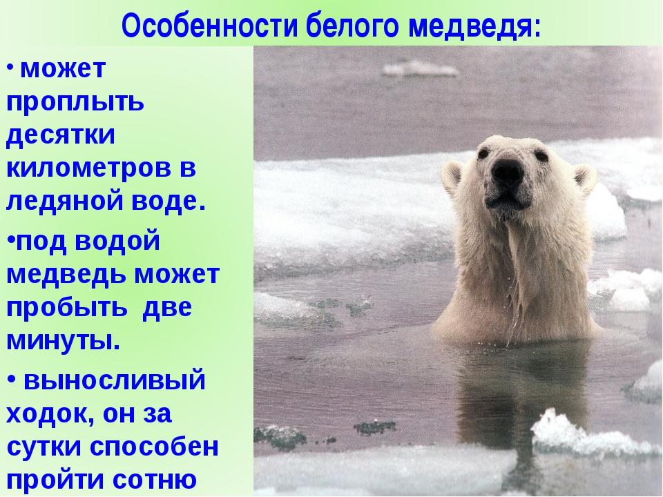 polar bear conclusion essay