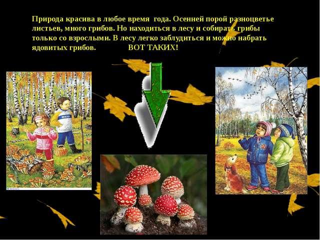Природа красива в любое время года. Осенней порой разноцветье листьев, много...