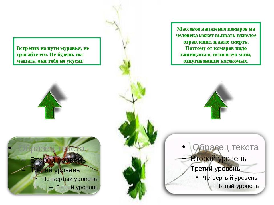 Встретив на пути муравья, не трогайте его. Не будешь им мешать, они тебя не у...