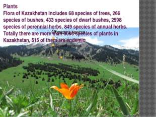 Plants Flora of Kazakhstan includes 68 species of trees, 266 species of bushe