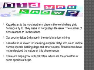Kazakhstan is the most northern place in the world where pink flamingos fly