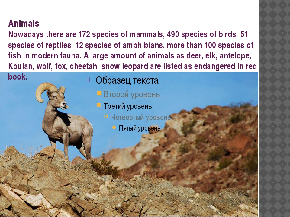 Animals Nowadays there are 172 species of mammals, 490 species of birds, 51 s...