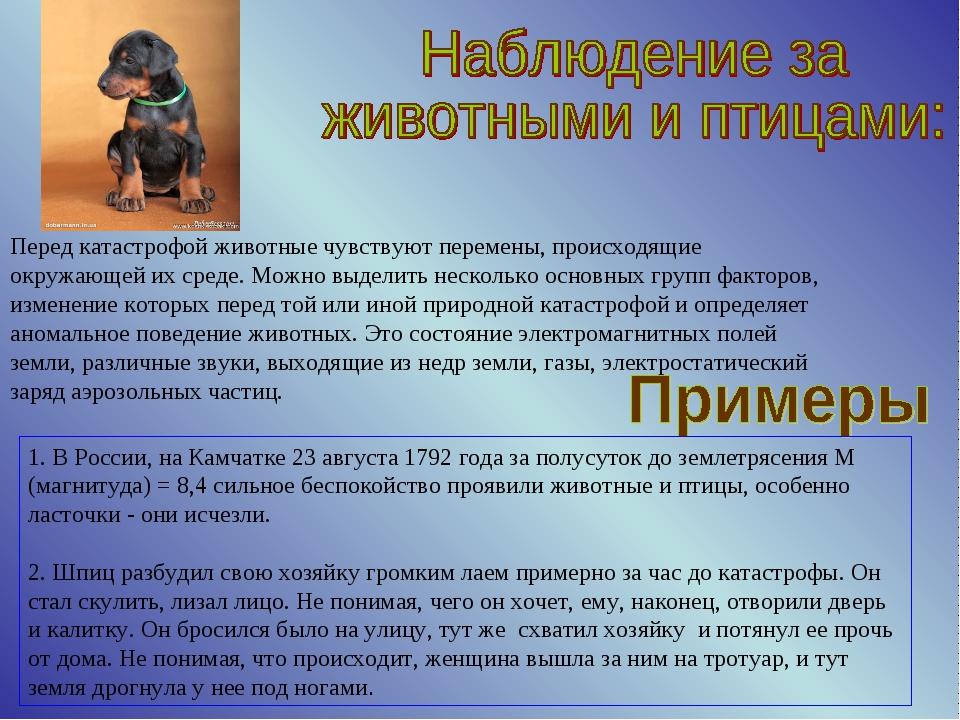 Перед катастрофой животные чувствуют перемены, происходящие окружающей их сре...