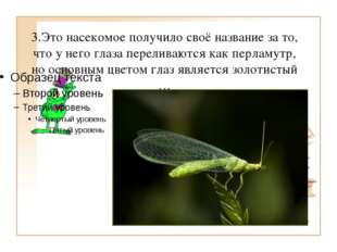 3.Это насекомое получило своё название за то, что у него глаза переливаются к