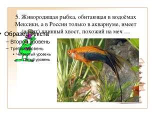 5. Живородящая рыбка, обитающая в водоёмах Мексики, а в России только в аквар