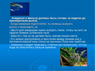 - Аквариум и фильтр должны быть готовы за неделю до приобретения рыбок.