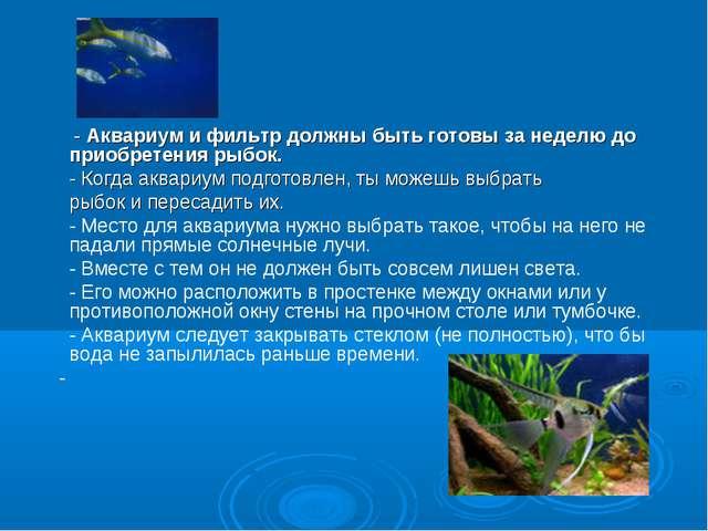 - Аквариум и фильтр должны быть готовы за неделю до приобретения рыбок....