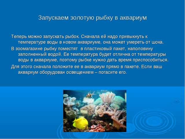 Запускаем золотую рыбку в аквариум Теперь можно запускать рыбок. Сначала ей н...
