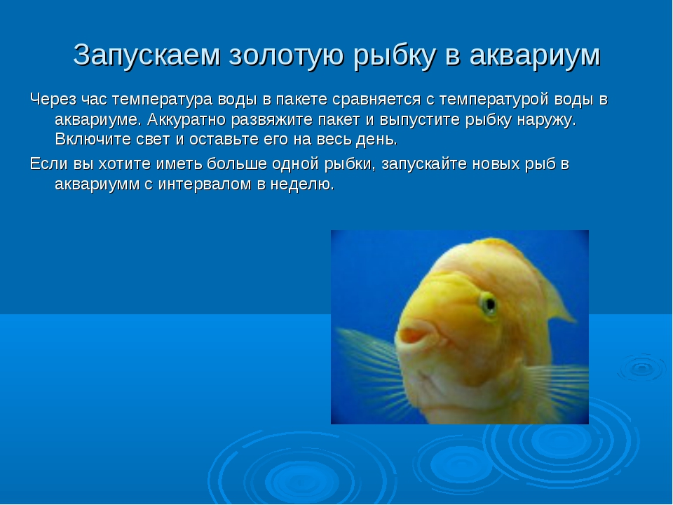 Запускаем золотую рыбку в аквариум Через час температура воды в пакете сравня...